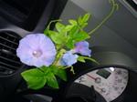 flower200607